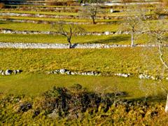 Il paesaggio terrazzato